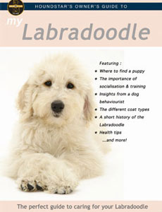 My Labradoodle' DVD