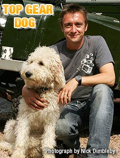 Top Gear - Labradoodle